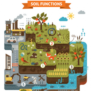 clean planet; healthy soils; soil functions